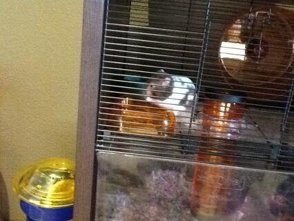 Look at Rex chilling in his cage!