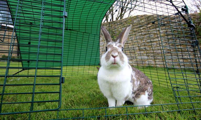 Pet bunnies will love spending time in the safe, spacious rabbit run