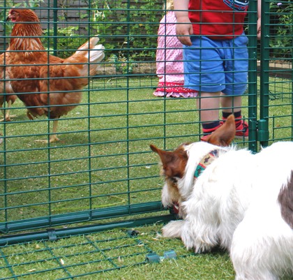 Secuirty skirting on the Omlet walk in chicken run.